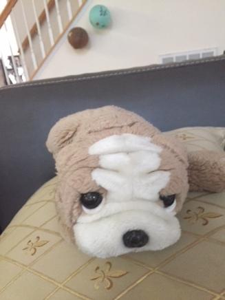 Rug Doggy